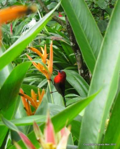 birdsingapore
