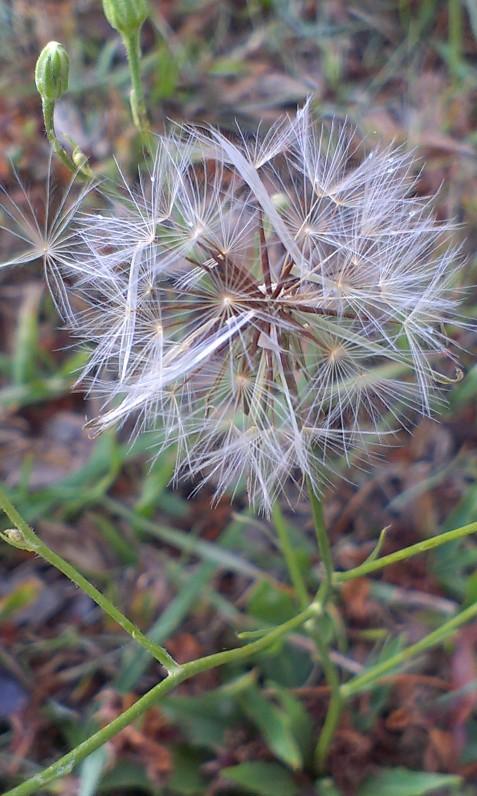 plants, weeds