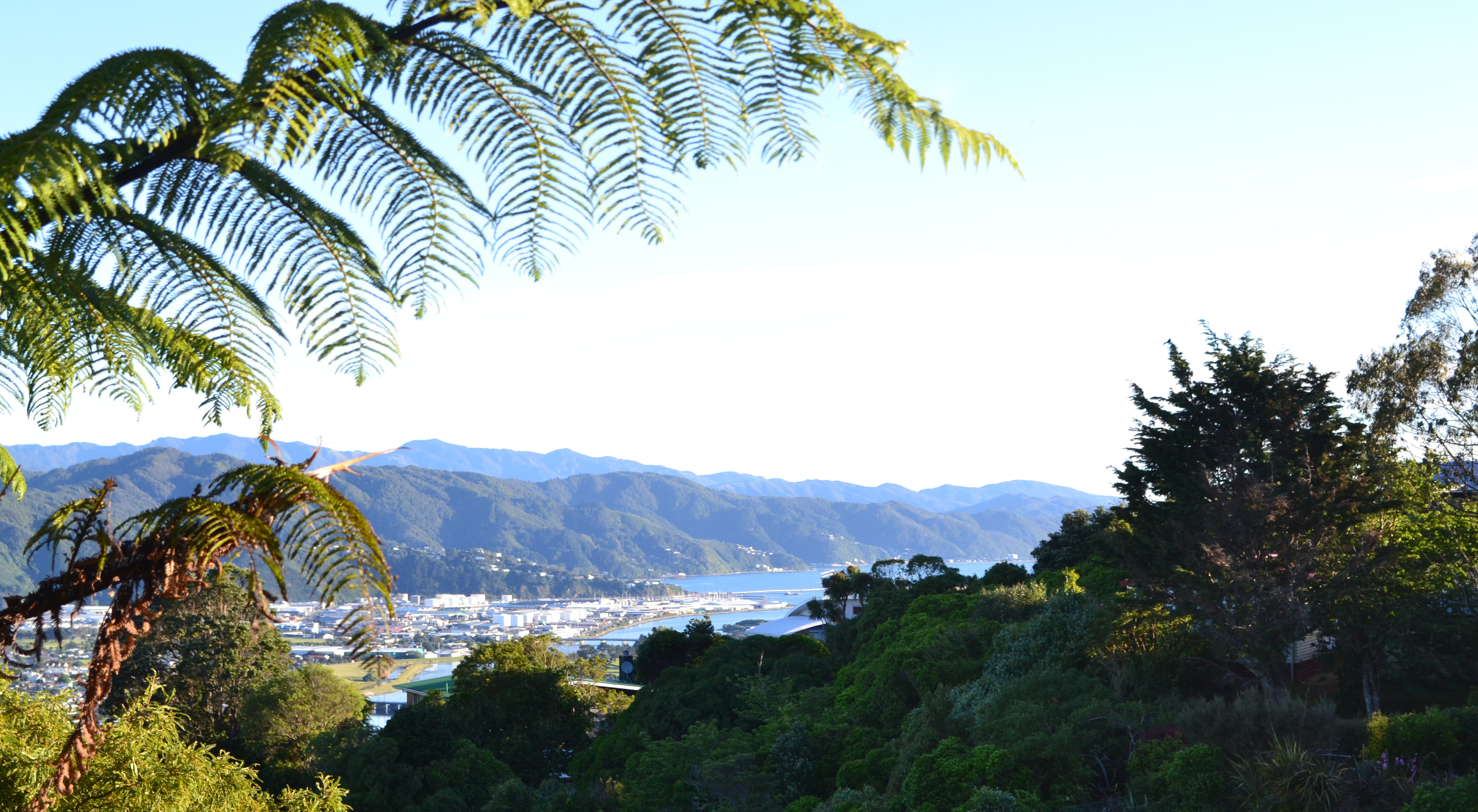 NormandaleNew Zealand 2013 411