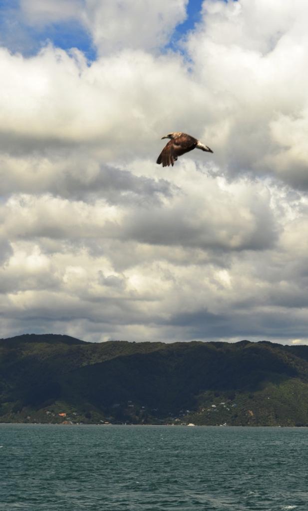 New Zealand 2013 1262