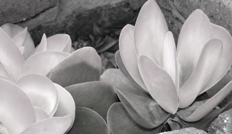 Monochromatic Flower subject.