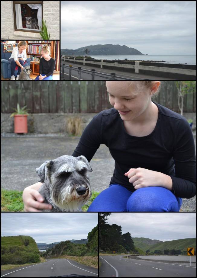 PetchallengemeetingtrompieNew Zealand