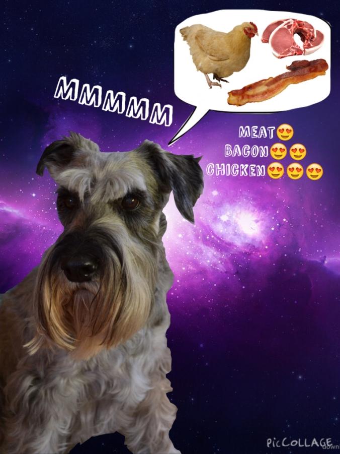 Dog photo collage