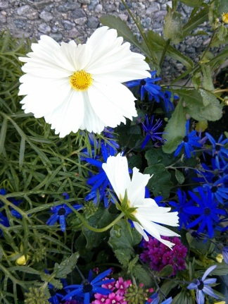 LarsStana flowersl