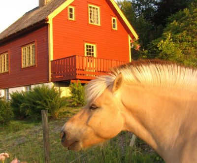 viking horse