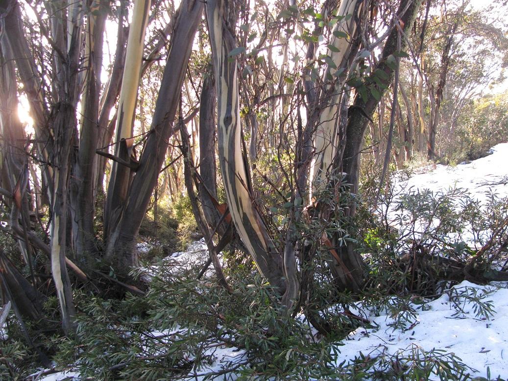snowgums falls cree 2011