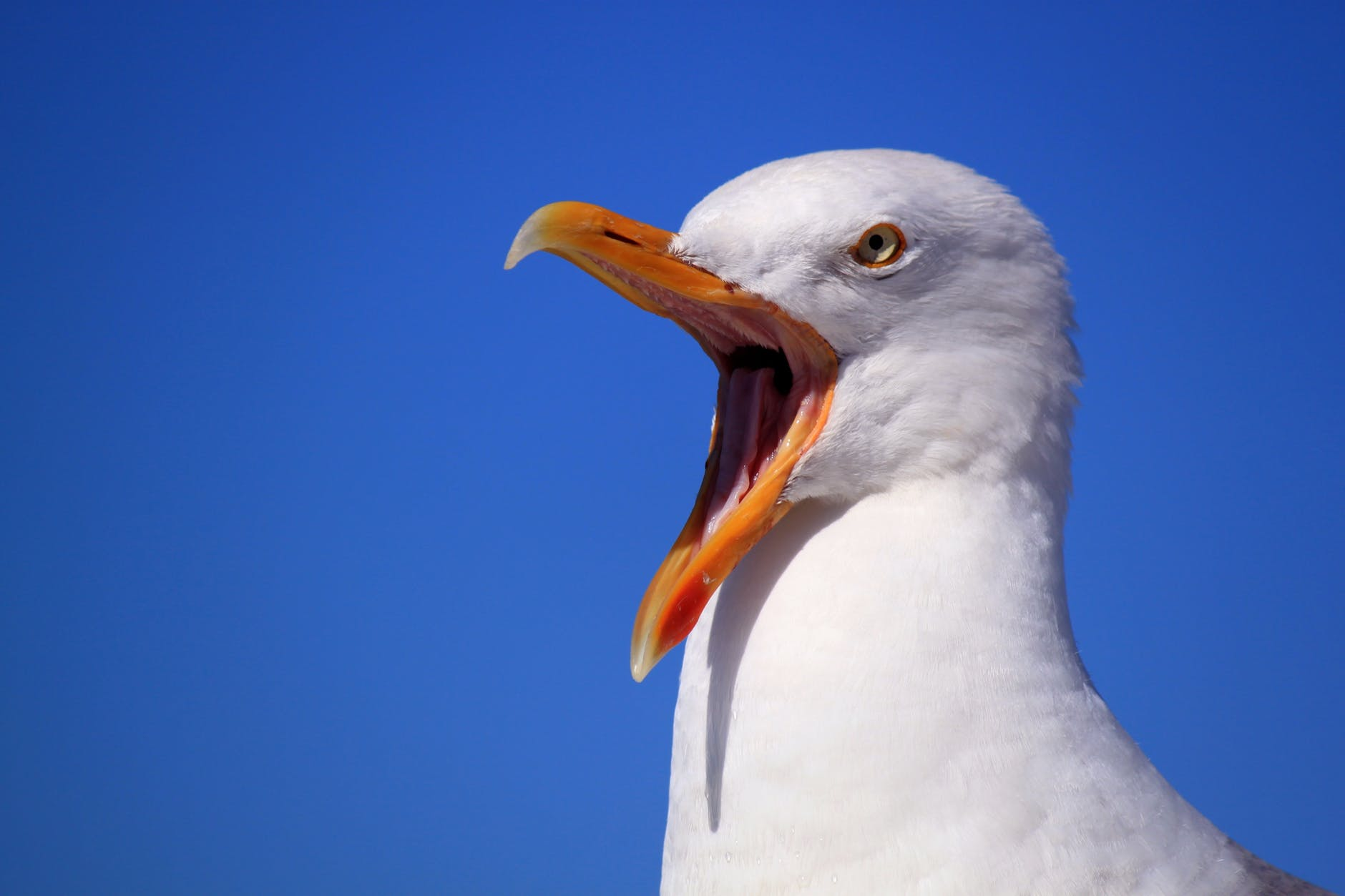 seagull-sky-holiday-bird-56618.jpeg
