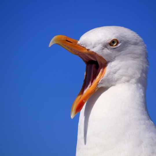 bird-talk-yell