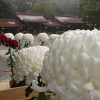 Friendly Friday Challenge - Close Examination
