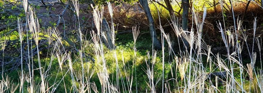 grass amongst mangroves at the beach